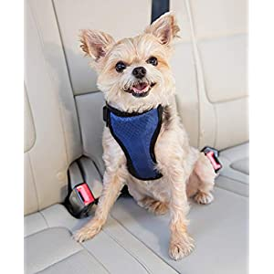 PetSafe Happy Ride Deluxe Car Harness for Dogs – Adjustable, Multiple Sizes, Includes Seat Belt Tether