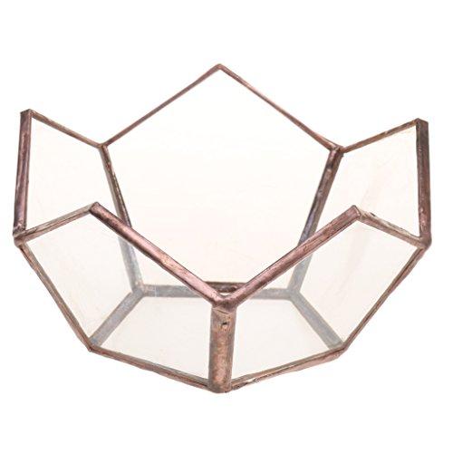 oshhni Geometrisches Glas Terrarium Box...