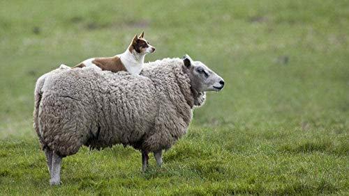 YUJH Rompecabezas 1000 Piezas de Rompecabezas de Madera Juego de Rompecabezas-Rompecabezas de Juguete Juego de Rompecabezas para Adultos Juguete Educativo Rompecabezas de ovejas y Gatos