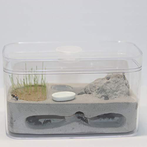 ZZWBOX Ameisennest Ameisenvilla Ameisenfutter Bauernhof Kunststoffdisplay Quadratische Schachtel für die Ameisenfütterung