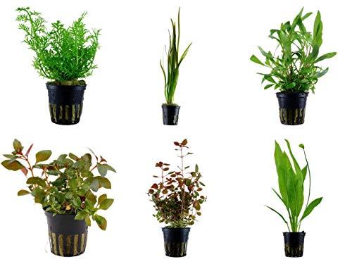 Tropica Hintergrund Set mit 6 Topf Pflanzen Aquariumpflanzenset Nr.26 Wasserpflanzen Aquarium Aquariumpflanzen