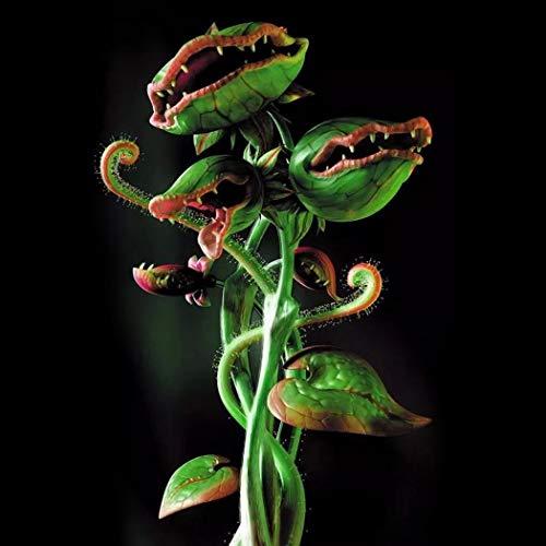Acecoree Samen Haus- 50/100 Stück Fliegenfalle Pflanzensamen Fleischfressende Samen Garten,Tasse Dionaea Muscipula Samen (50 Stück/Beutel, Grün)
