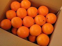 オレンジ30個入り
