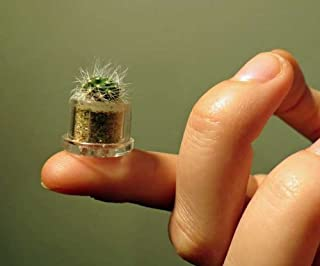 Fluffy Cactus Live Terrarium Plant Keychain Accessory
