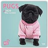 Pugs - Möpse 2020: Original Myrna-Kalender [Mehrsprachig] [Kalender] (Wall-Kalender)