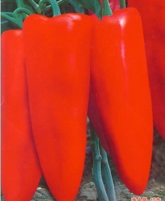 200pcs super Big Red Poivron Seeds 100% Haute Qualité Paprika