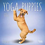 Yoga Puppies OFFICIAL 2021 7 x 7 Inch Monthly Mini Wall Calendar, Animals Humor Puppy