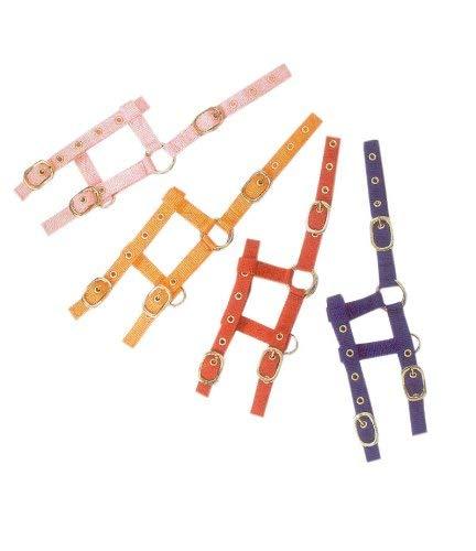 Shetty mini-houder voor veulen verstelbaar nylon ook voor houten paarden