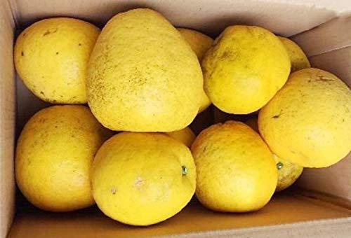 農薬をまいていない 夏文旦 5kg×1箱 ご家庭用 青山農園 河内晩柑 ザボン 和製グレープフルーツ 果汁多め 爽やかな風味