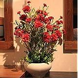 18色がありますカーネーションの種多年生の花鉢植え園芸植物Caryophyllus花の種子200個6