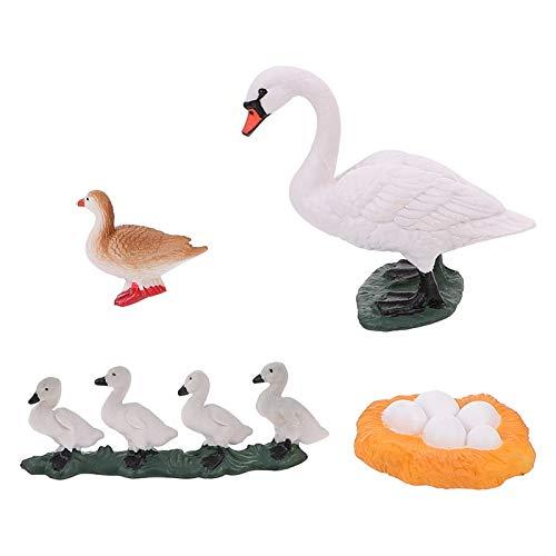 YARNOW 4 Piezas Animal Figurita Ciclo Vida Conjunto Ciclo de Vida de Un Cisne Kit Niños Aprendizaje Enseñanza Ciclo de Crecimiento de Insectos Juguete Modelo de Juguete Preescolar