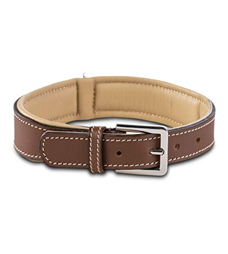 Jack & Russell Premium Hunde Leder Halsband Amy - Lederhalsband aus Echtleder mit Original J&R Prägestempel - robust & elegant (L, Braun/Beige)