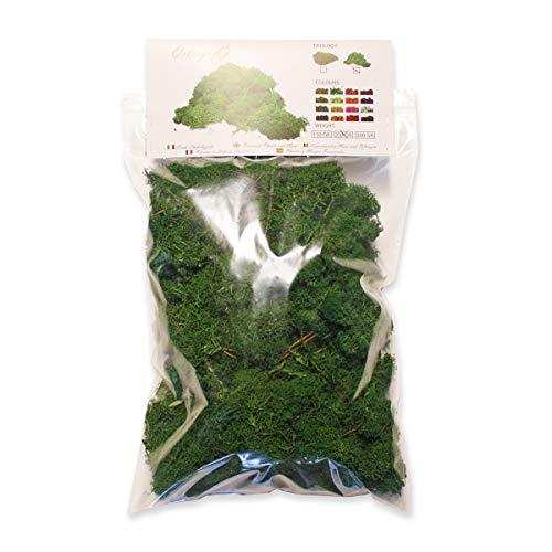 Ortisgreen Liquen Preservado Premium 250 gr. Color Verde Bosque. Musgo Preservado. Uso: Cuadros Vegetales Preservados, Diorama, Presepio, Modelismo.