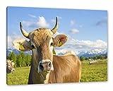 Pixxprint Neugierige Kuh auf Weide im Allgäu als