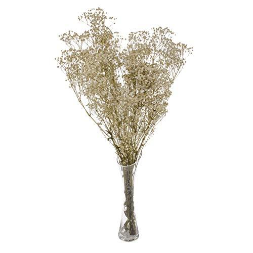 Euro Flora Flor Seca Gypsophla Paniculata Bunch 63 Cm