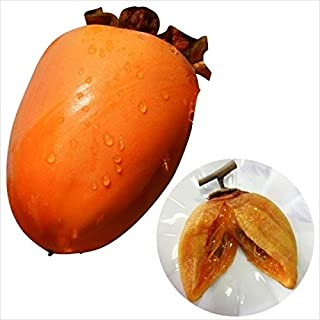 国華園 果樹苗 カキ 渋柿 夢西条(旧:溝無西条) 1株
