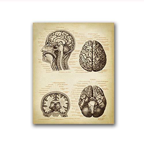 Terilizi hersenen print menselijke kop anatomie vintage illustratie poster neurologie wetenschap kunst canvas schilderij schilderij schilderij gift 50 * 70 cm niet ingelijst