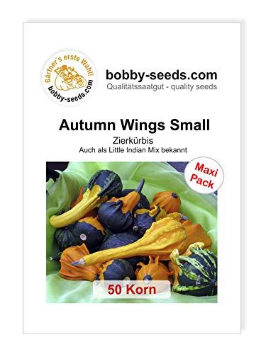 Autumn Wing S Zierkürbis von Bobby-Seeds, 50 Korn