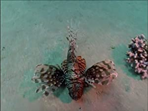 World of the Lion Fish