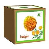 Sow and Grow DIY Seed Starter Easy Grow it Yourself Gardening Kit of Marigold - Beginner Gardeners Gardening Set