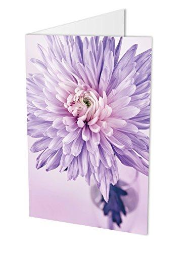 Maxi-Kaart CHRYSANTHEME, vouwkaart DIN A4 met envelop, bloemenkaart, verjaardagskaart, felicitatiekaart, felicitaties, felicitatie, bloem