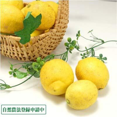 【無選別】広島県産(とびしま)レモン 10kg 無・無 (広島県 とびしま農園) 産地直送 ふるさと21