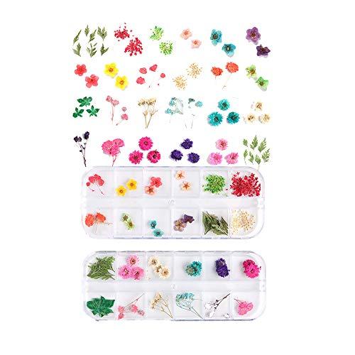 CHSG 2 Cajas Decoración De Uñas Flores Secas Para Arte De Uñas, Natural Flor Secas 3D, Se Puede Utilizar Como Decoración De Pared, Caja Del Teléfono Celular, Experimenta La Alegría Del Bricolaje