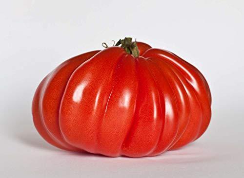 Asklepios-seeds® - Tomatensamen, 1.000 Samen Ochsenherz Tomate, riesige Fleischtomate, alte Sorte