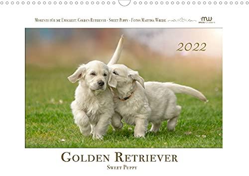 Golden Retriever - Sweet Puppy (Wandkalender 2022 DIN A3 quer)