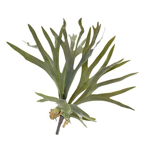 artplants.de Künstlicher Geweihfarn George mit 8 Blättern, grün, Ø 50cm, 40cm - Kunst Farn - Deko Wald Pflanze
