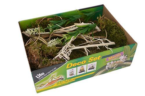 Life Experience Deco Set für kleine Nano-Terrarien