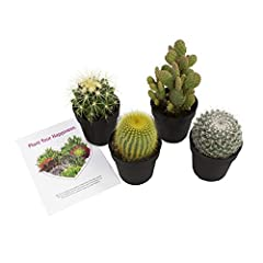 UNIQUE HAND SELECTED: Each order contains GROWN WITH LOVE and hand selected cactus plants. You will receive a variety of unique cactus similar to the ones in the photo which may include: Echinocactus, Mammillaria, Notocactus, Opuntia, and other cactu...