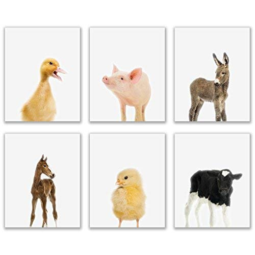 Baby Farm Animals Poster Prints - Set of 6 (8x10) Adorable Furry Barn Portraits Wall Art Nursery Decor - Calf (Cow) - Chick (Chicken) - Donkey - Foal (Horse) - Duckling (Duck) - Piglet (Pig)