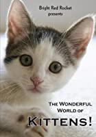 Wonderful World of Kittens [DVD] [Import]