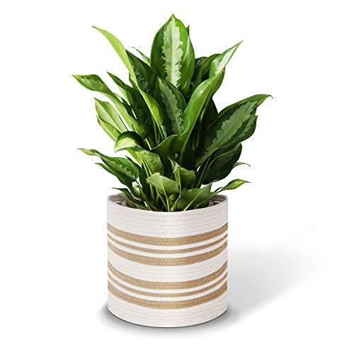 Cesta de cuerda de algodón para plantas, maceta de algodón, cestas de almacenamiento tejidas, maceta interior y organizador con asas de 28 x 28 cm