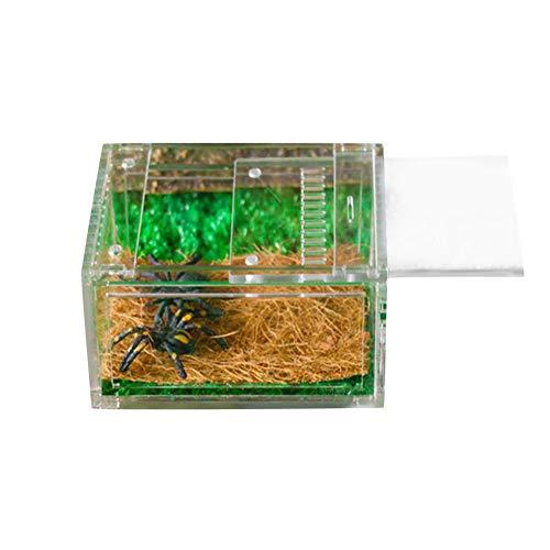 wendaby Acryl Reptilienbox Transparente Fütterungsbox Reptilienzuchtbecken Terrarium Für Spinnen Skorpione Gehörnte Frösche Käfer Faunarium