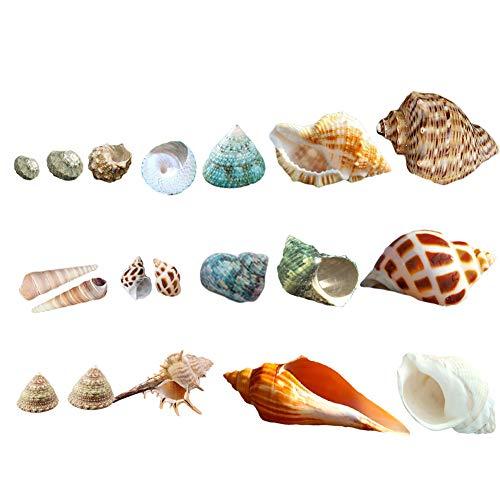 Luckybaby Shell Hermit Crab Shells Medium Small Mini Turbo Seashell Natural Sea Conch 1/4-1 1/2 Inch 15+ pcs