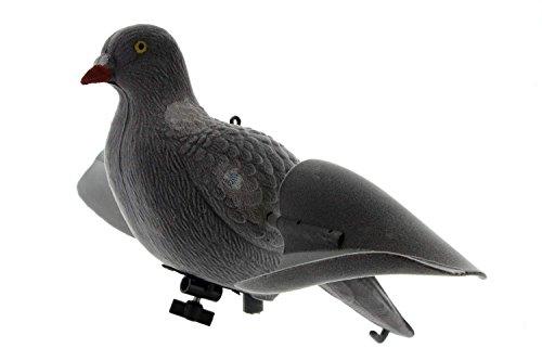 Europ Arm Appelant Pigeon Aile Tournante