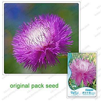 50 graines/Pack, rose Centaurea cyanus Graines, fleurs en pot parfum Balcon Bleuet Graines