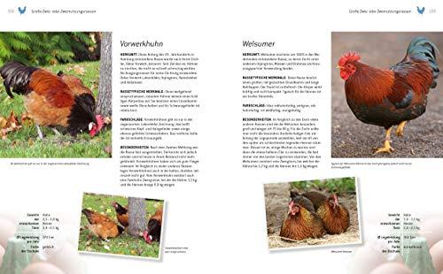 Das große Buch der Hühnerhaltung im eigenen Garten: Pflege, Haltung, Rassen - 3