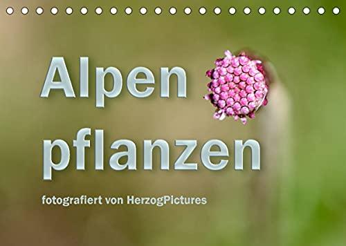 Alpenpflanzen fotografiert von HerzogPictures (Tischkalender 2022 DIN A5 quer)