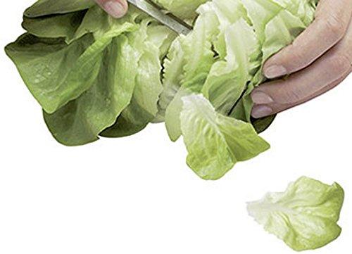 Salat Schnittsalat Salanova Salat Descartes RZ