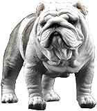 Bulldog (Inglés: Bulldog), También Conocido como Perro Tigre,...