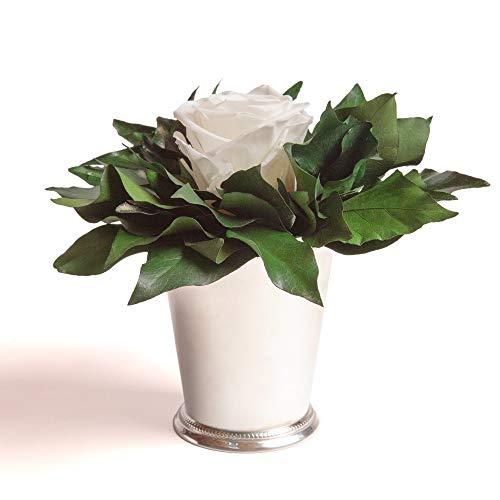 ROSEMARIE SCHULZ Heidelberg Infinity Blume in silberfarbenen Becher ewige Rose konserviert Blumenstrauß langhaltend (Weiss, 1 Rose)