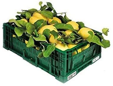 ZITRONEN NICHT BEHANDELT - Garantiertes Schalen-essbares - Digital-Garten BIO - Produkte in Kalabrien - ITALIEN (5)