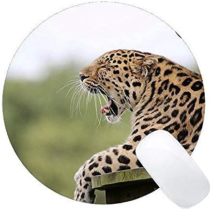 Amazon.es: Suru - Yanteng: Informática