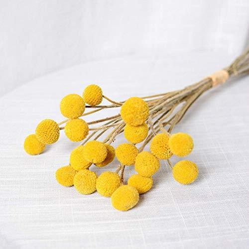 Desinding Secas Rama 3cm Bola Ramo Grande Billy Plantas secas de Las Flores Amarillas de decoración Floral con la decoración del hogar Accesorios Flores Artificiales (Color : 20 pcs)