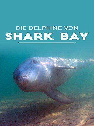 Samu und die Haie - Die Delphine von Shark Bay