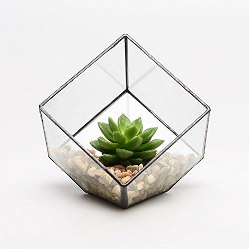 Moderne Glas-Pyramide, Tisch-Pflanzgefäß für Sukkulenten, als Terrarium-Box, für Luftpflanzen und Kakteen, 150*150*150