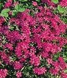Zoom IMG-2 inkeme giardino flowers of the